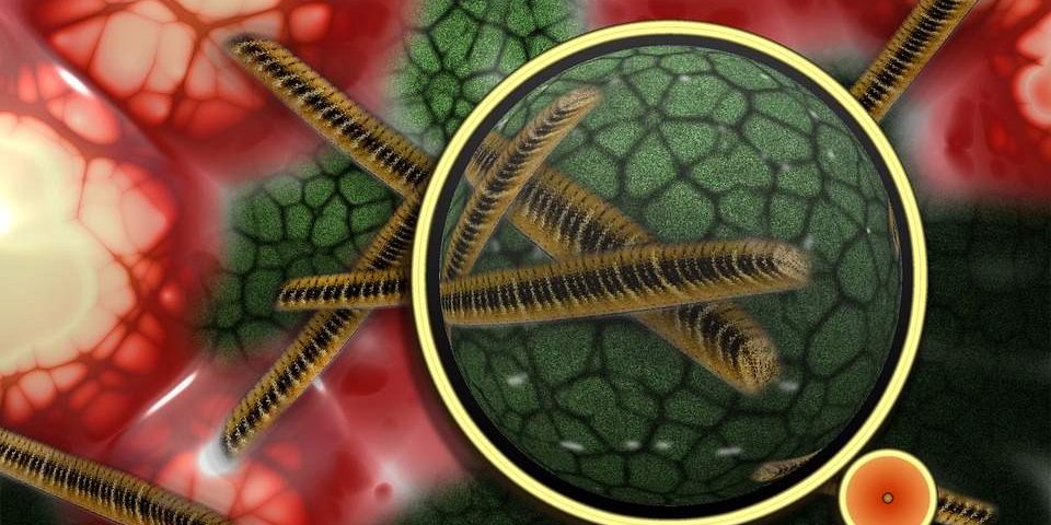 e-coli