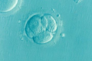 embryo-1514192_640-compressed