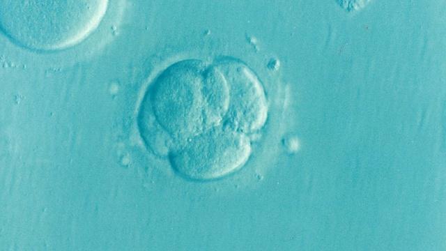 embryo-1514192_640-compressed