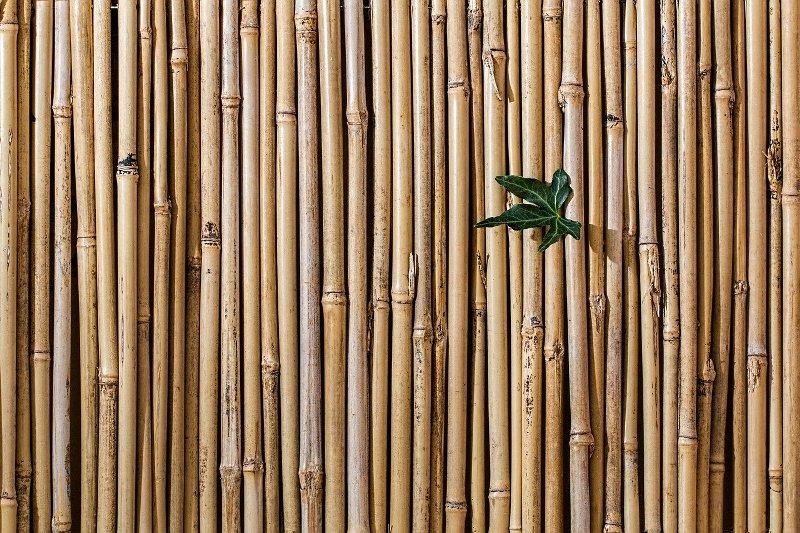bambus-za-ogradu-u-dvoristu