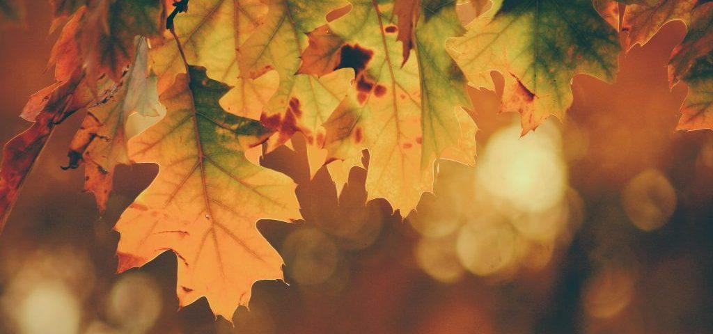 lisce-na-drvetu-u-jesen
